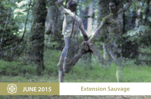 Extension-Sauvage-EN