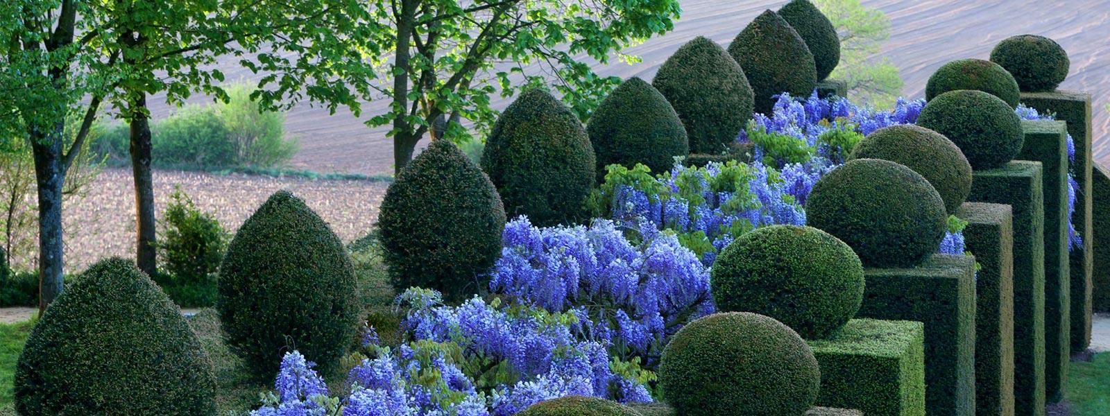 chateau-et-jardins-de-la-ballue-allee-des-glycines