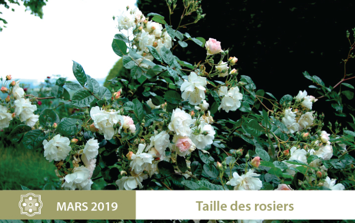 taille-rosiers-2019